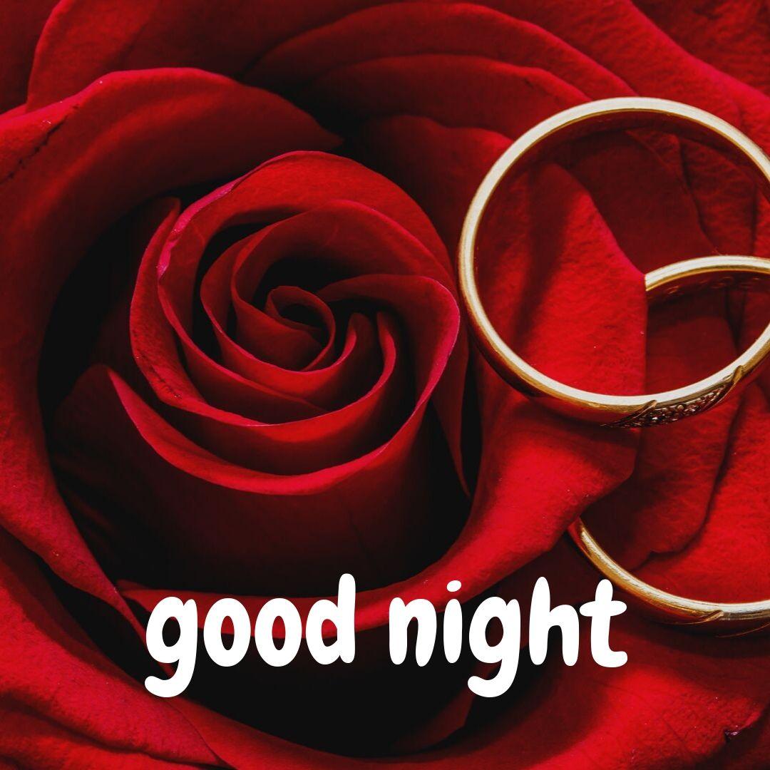 Best Rose Flower Good Night Images 2020 Exact Creative Views